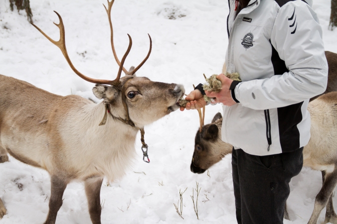 sea_and_mountain_reindeer