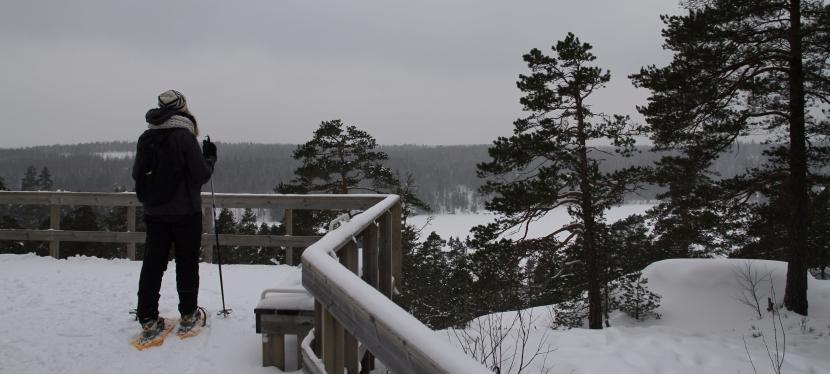 Лучшие маршруты для снегоступинга в национальном парке Нууксио. Хотьба на снегоступах — модный и полезный видспорта.